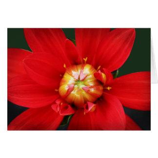 Dahlia rouge cartes
