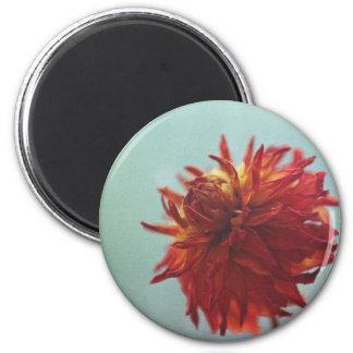 Dahlia sec magnet rond 8 cm