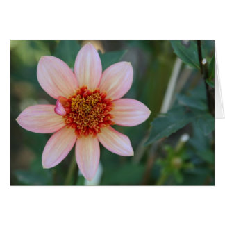 Dahlia, Totally Tangerine Card