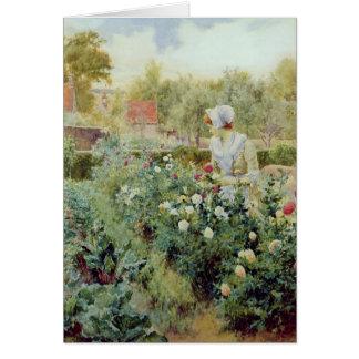 Dahlias, 1896 card