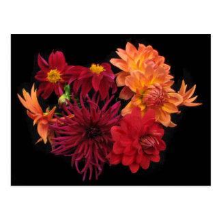 Dahlias for Autumn Postcard