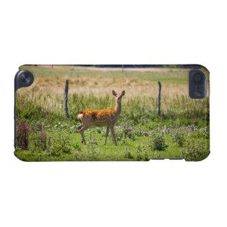 Daine curieuse dans un pré d'herbe, photo animale