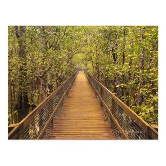 Daintree National Park (UNESCO World Heritage Postcard