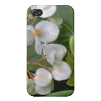 Dainty Cluster of White Flowers iPhone 4 Cases