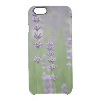 Dainty Lavender