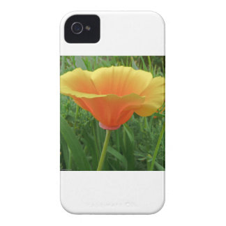 Dainty Orange Posie iPhone 4 Case-Mate Case
