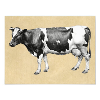 Dairy Cow Photo Print