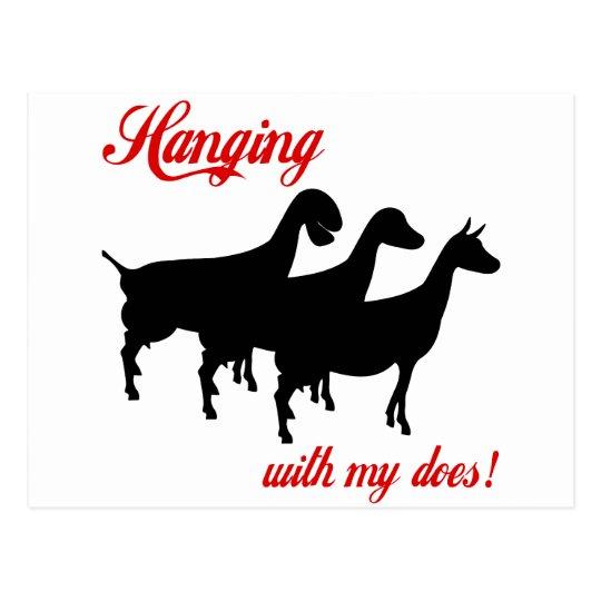 Dairy Goats Postcard