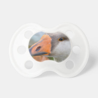 Daisi the house goose pacifier