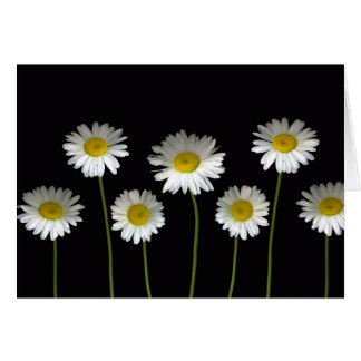 Daisies Galore Greeting card