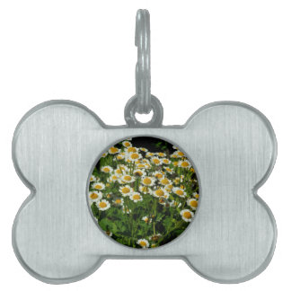 Daisies Pet Name Tags