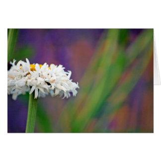 Daisy 2 Card
