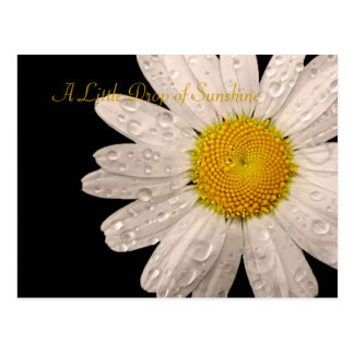 "Daisy ""A little drop of sunshine"" postcard"