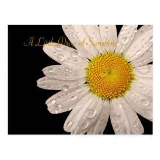 "Daisy ""A little drop of sunshine"" postcard"