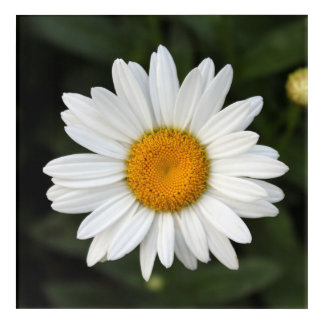 Daisy Acrylic Wall Art