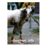 """Daisy""  Appaloosa Filly Postcards"