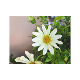 Daisy before blurred background - Canvas