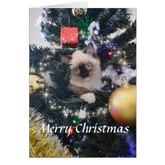 Daisy Blue Kitten Merry Christmas Greeting Card