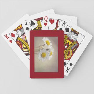 Daisy Cards
