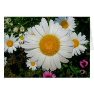 Daisy Chain notecard