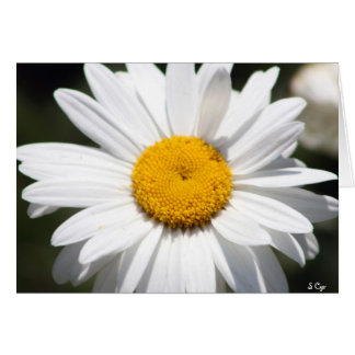Daisy Darling Card