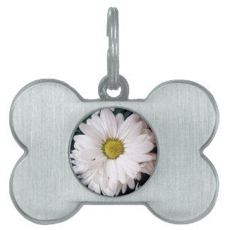 *Daisy* Dog Collar Tag Pet Tags