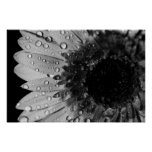 Daisy Droplets (Black and White) Poster