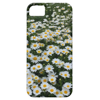 Daisy Field iPhone SE/5/5S Barely There Case