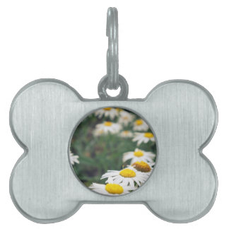 Daisy Field Pet Name Tag