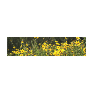 Daisy Field Photo Canvas Print