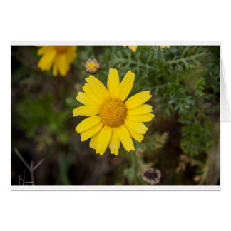 Daisy flower cu yellow card