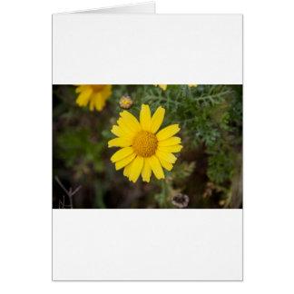 Daisy flower cu yellow card