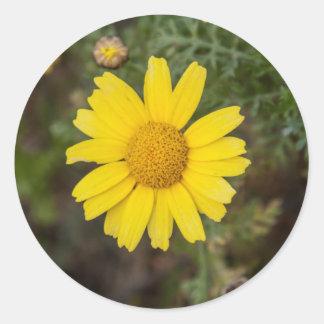 Daisy flower cu yellow classic round sticker