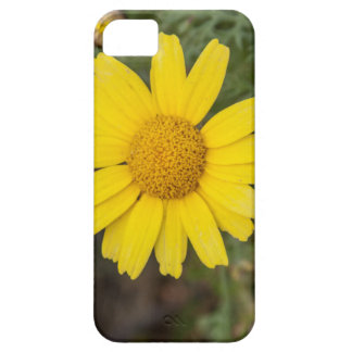 Daisy flower cu yellow iPhone 5 cover