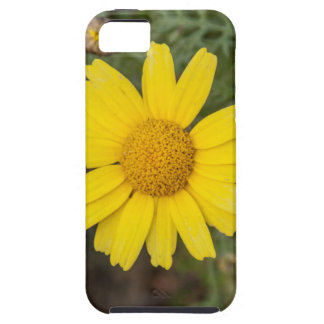 Daisy flower cu yellow iPhone 5 covers