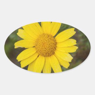 Daisy flower cu yellow oval sticker