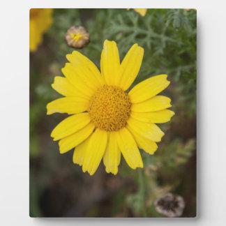 Daisy flower cu yellow plaque