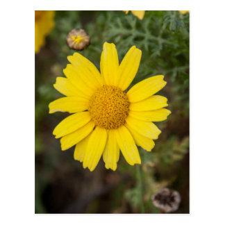 Daisy flower cu yellow postcard