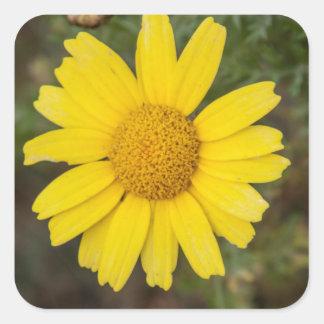 Daisy flower cu yellow square sticker