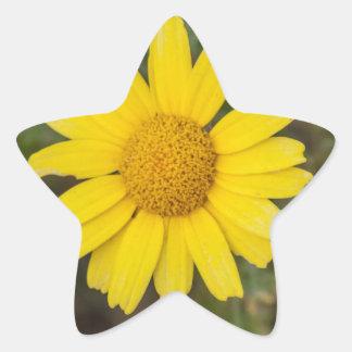Daisy flower cu yellow star sticker