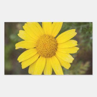 Daisy flower cu yellow sticker