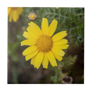 Daisy flower cu yellow tile