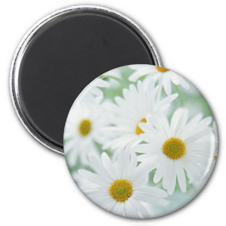 Daisy flowers 2 inch round magnet