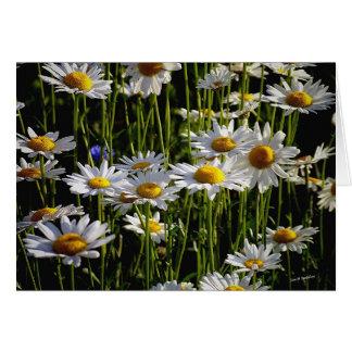 Daisy Forest Card