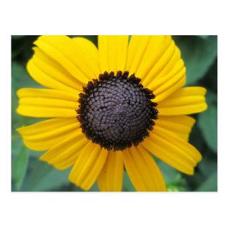 Daisy Garden Flower Gloriosa Postcard