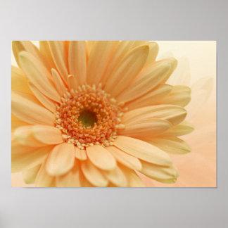 Daisy-gerbera soft peach color. Print