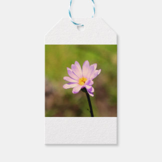 Daisy Lane Gift Tags