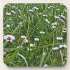 Daisy Meadow Coaster