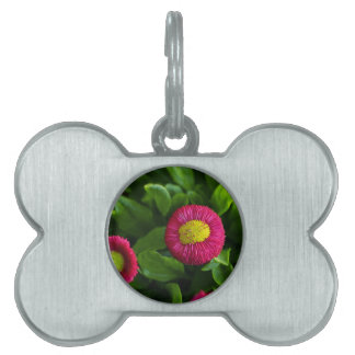daisy pet tags