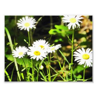 Daisy Photo Print